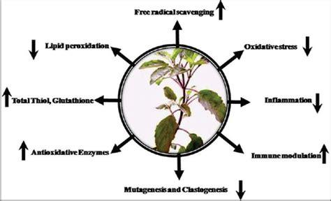 Anticancer activity of medicinal plants PhD thesis